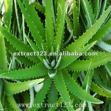 Excellent Quality Natural Aloe Vera Extract