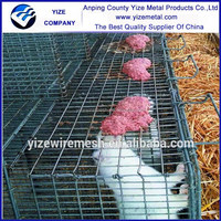 Hot selling mink farming mink cage factory in China /unique mink cages