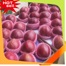Best price Huaniu apple,Fresh and delicious