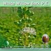 Natural Cimicifuga Racemosa Extract Cimicifugoside 2.5% ,5%,8%
