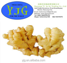 High Quality 150g Fresh Yellow Ginger from China