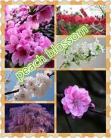 project artificial peach blossom flower plastic peach blossom plant flower simulation fake silk blossom flowers