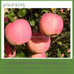 Fresh wholesale apple fruit price in China
