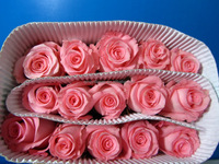 Reasonable price hotsell holland roses