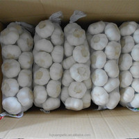 Fresh garlic packed in small mesh packages for wholesale