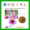 Manufacturer supply Pure Natural Polyphenol and Chicoric Acid powder Echinacea purpurea Extract
