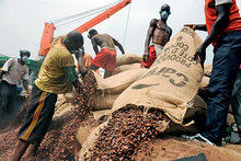 BULK SUPPLY FOOD COCOA BEANS FOR SALE