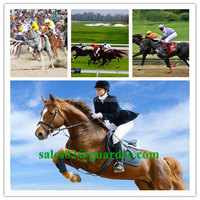 Health Care Product Strong Elastic Horse Cohesive Bandage 10 cm