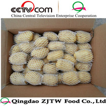 shandong potato from vegetable city
