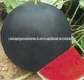 W02 Heima maturidade meados de tarde sem sementes preto melancia sementes para o plantio