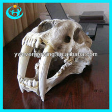 1:1 high simulation model of americas saber-toothed tiger skull halloween props