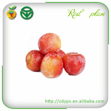 Bulk Fresh Fruits /Red Plums/ Beauty Products/sweet