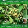 Top Quality Gymnema Extract, Gymnema Powder Extract, Gymnema PE