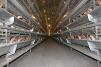 Customer Designed Layers Poultry Chicken Cage