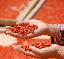 China new red Goji Berries 250g pack,Lycium barbarum L.