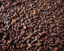 UTZ Furmentation Cocoa Beans