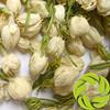 Top quality china mainland in bulk dry herbs good for sleep anti-aging herbal tea mo li hua jasminum sambac dried jasmine flower
