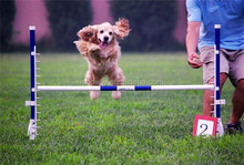 Great for dogs and owners Unique outdoor Pet Agility training range