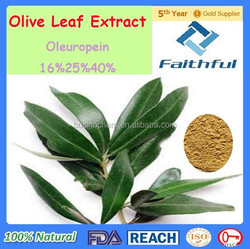 Olive Leaf Extract / botanical extract / Fda Gmp Iso9001 Organic Olive Leaf Extract