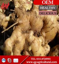 100% natural fresh ginger/air dried ginger/half-dried ginger mesh bag sale