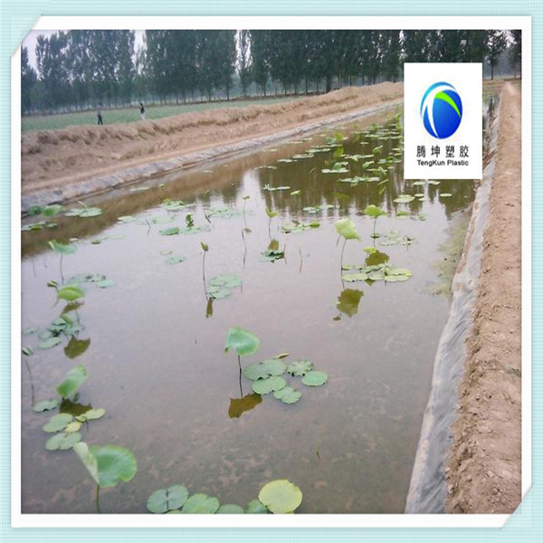 Pond and lake dam waterproof liner hdpe geomembrane of for Cheap pond liner