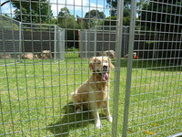 Hot dip galvanized steel cheap portable temporary fencing for dogs
