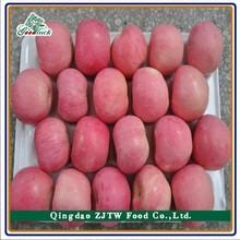 Bulk Fresh Fruit Apple New Crop