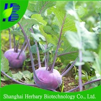 Fast growing hybrid F1 Kohlrabi Seeds with best quality