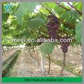 Projeto o sistema de irrigação para frutas do pomar de árvores
