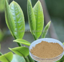 100% Natural Polyphenol 40%-98% Green Tea Extract