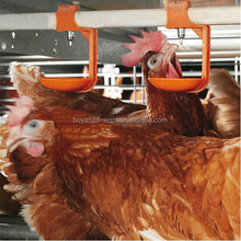Chicken parent battery cages with high survival rate