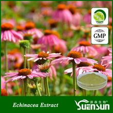 100% natural herbal chicoric acid echinacea extract