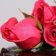 export fresh cut flowers roses from Kunming planting base