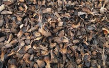 Grade A Palm Kernel Shell ( PKS) and other related products