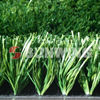Mini carpet artificial grass for synthetic football field