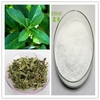 Wholesale water soluble stevia plant extract