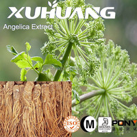 2015 Hot-selling Green Natural High Quality Angelica Root Extract,Angelica Extract powder