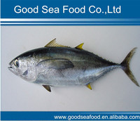 Frozen IQF wholesale tuna fish