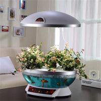 dragon fruit seed flower pot