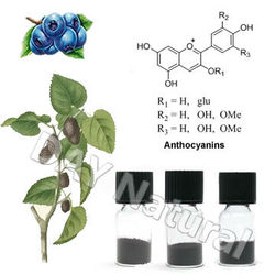 Health Food Supplement Black Rice Anthocyanin with Halal Kosher