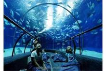 2015-2016 Chinese Top Fashionable Large Acrylic Aquarium Leading Professional Manufacturer