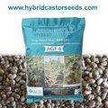 híbrido castor semillas de frijol