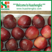 Wholesale Chinese Red Huaniu Apples