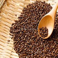 Jue ming zi zhong zi negro alta pureza semilla para tea Cassia Tora semilla