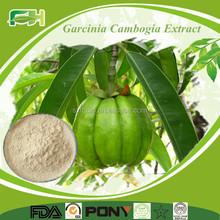 2015 Wholesale Natural Garcinia Cambogia Fruit Extract