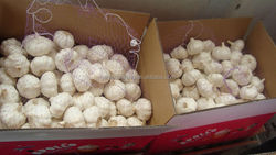 Braid Garlic for Sale