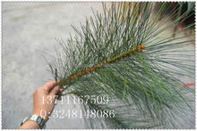 artificial long leaves pine branches / fake branches / artificial pine tree branches for weddings decorative