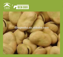 delicious individual quick frozen iqf broad bean new crop Yunnan dried broad beans dried broad beans
