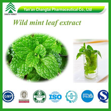 GMP factory supply best selling 100% natural Wild mint leaf extract