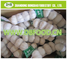 Fresh Style and Organic Cultivation Type fresh white garlic